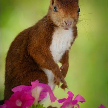 Retrato con flores