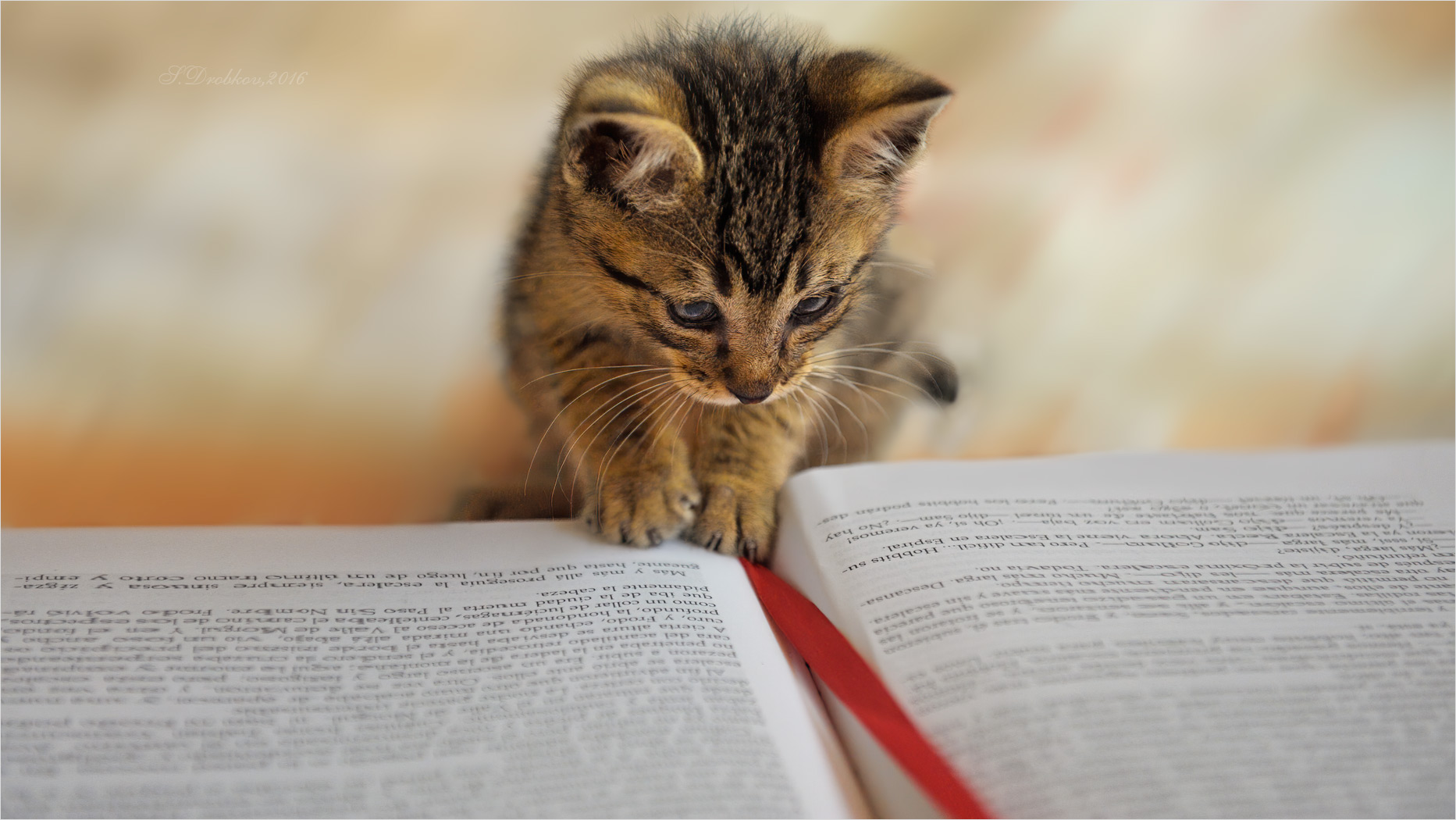 Saber leer
