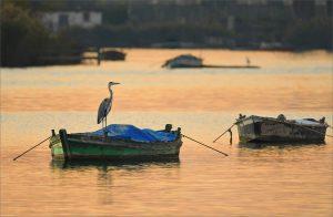 El último pescador