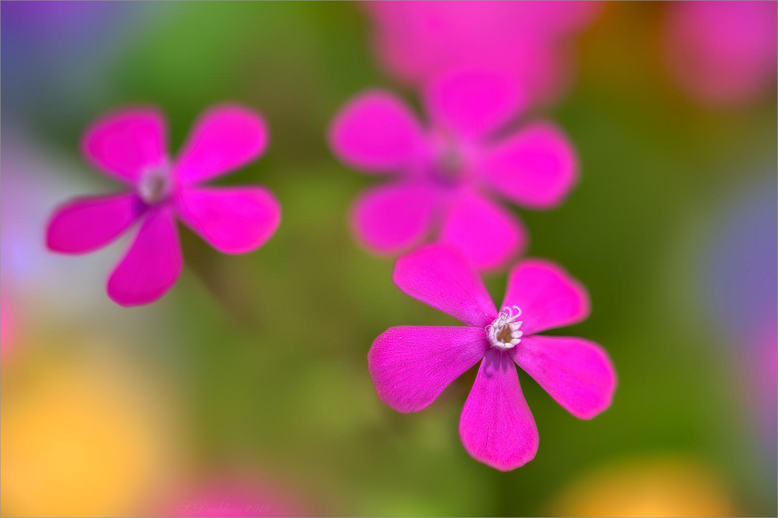 Spring multicolor